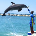 1 Adult-Dolphin Meet & Greet Special (Dolphin Cove Adventure Park)